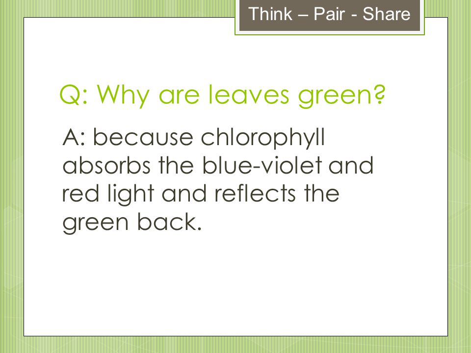 Think – Pair - Share Q: Why are leaves green.