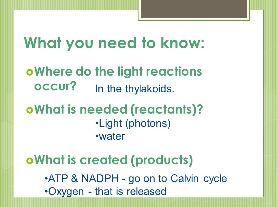 What you need to know: Where do the light reactions occur
