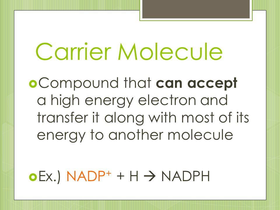 Carrier Molecule Compound that can accept a high energy electron and transfer it along with most of its energy to another molecule.