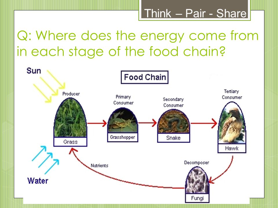Q: Where does the energy come from in each stage of the food chain