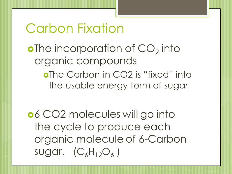 Carbon Fixation The incorporation of CO2 into organic compounds