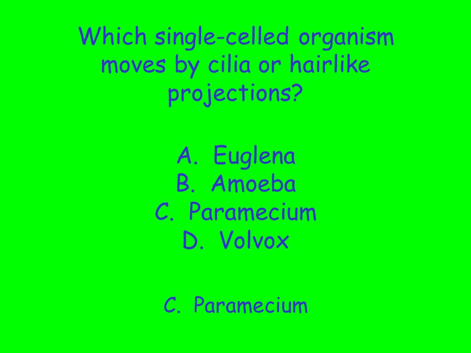 Which single-celled organism moves by cilia or hairlike projections. A