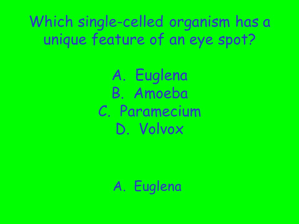 Which single-celled organism has a unique feature of an eye spot. A
