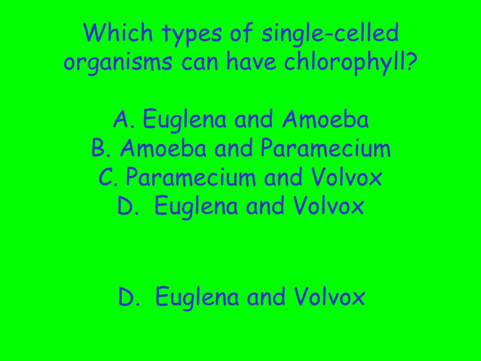 Which types of single-celled organisms can have chlorophyll. A