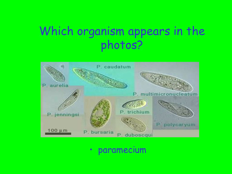 Which organism appears in the photos