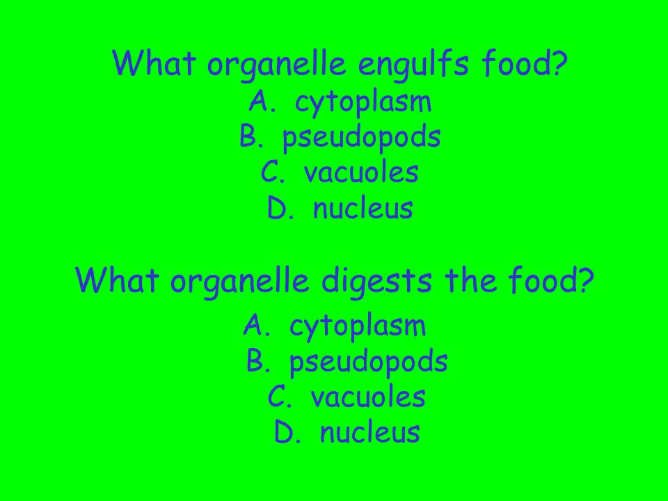 What organelle digests the food