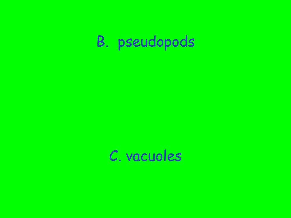 B. pseudopods C. vacuoles