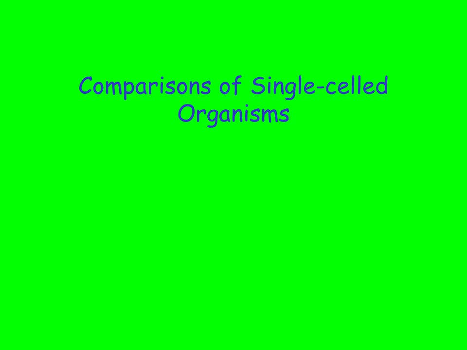 Comparisons of Single-celled Organisms