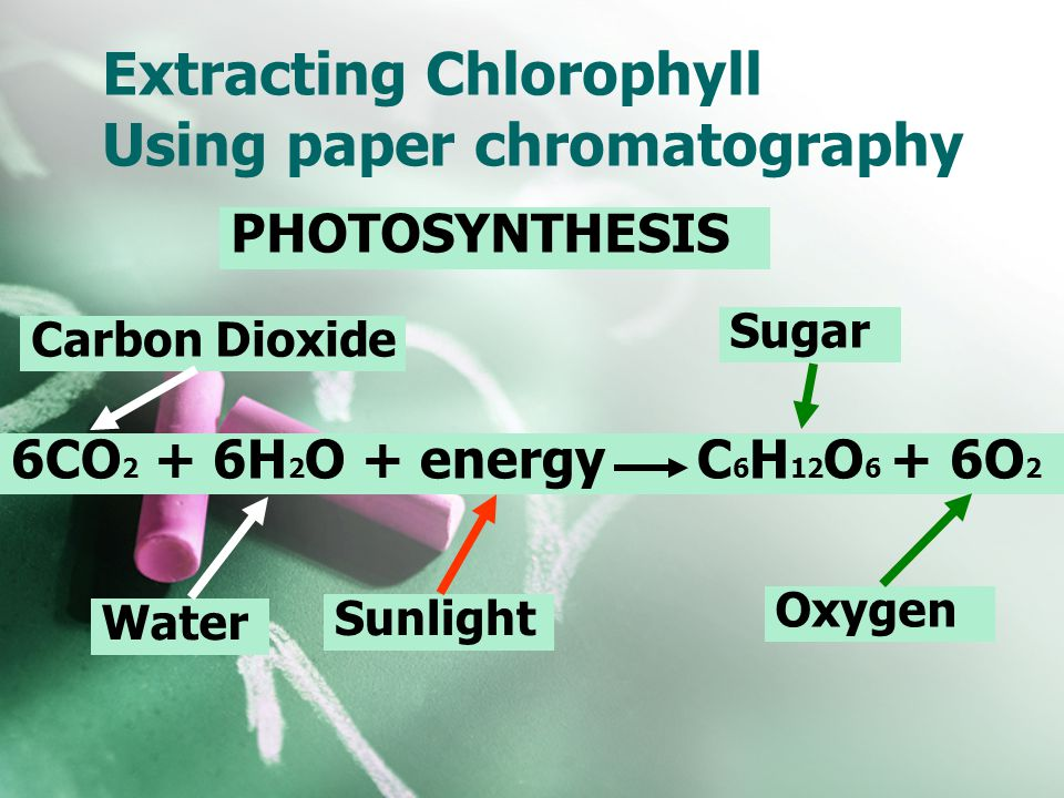 Extracting Chlorophyll Using paper chromatography