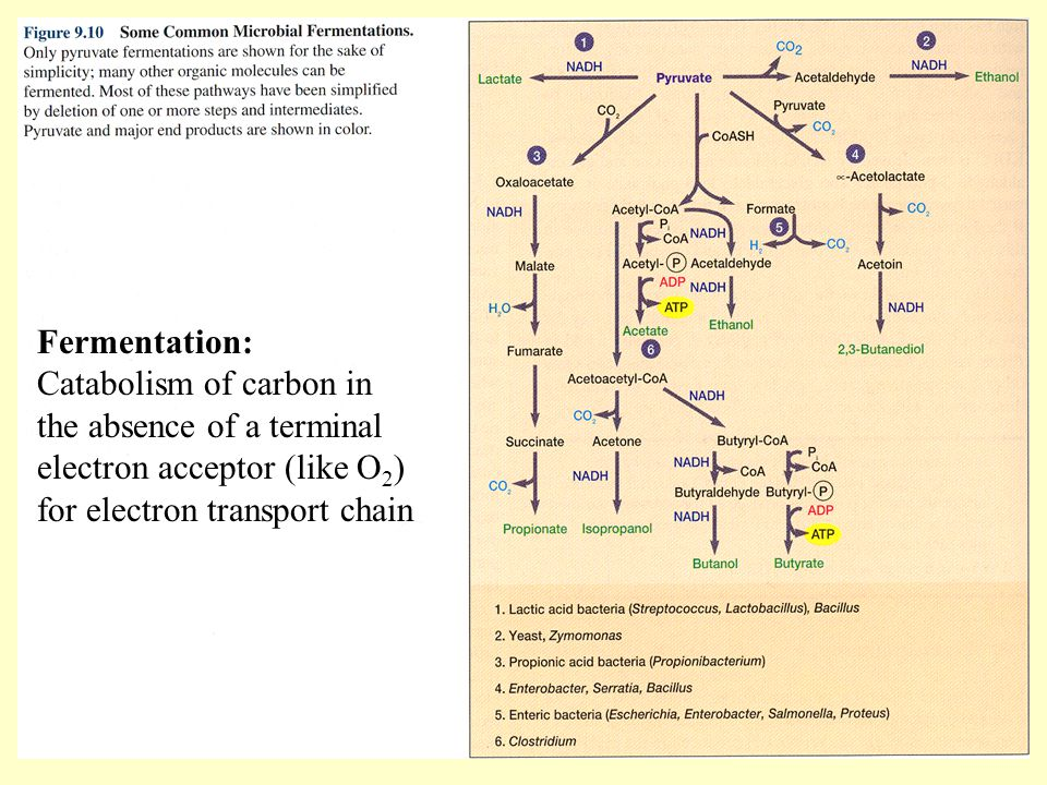 Fermentation: Catabolism of carbon in the absence of a terminal electron acceptor (like O2) for electron transport chain.
