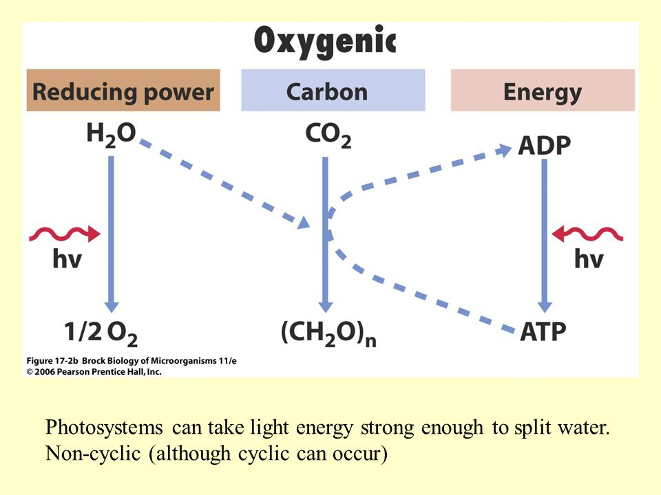 Photosystems can take light energy strong enough to split water.