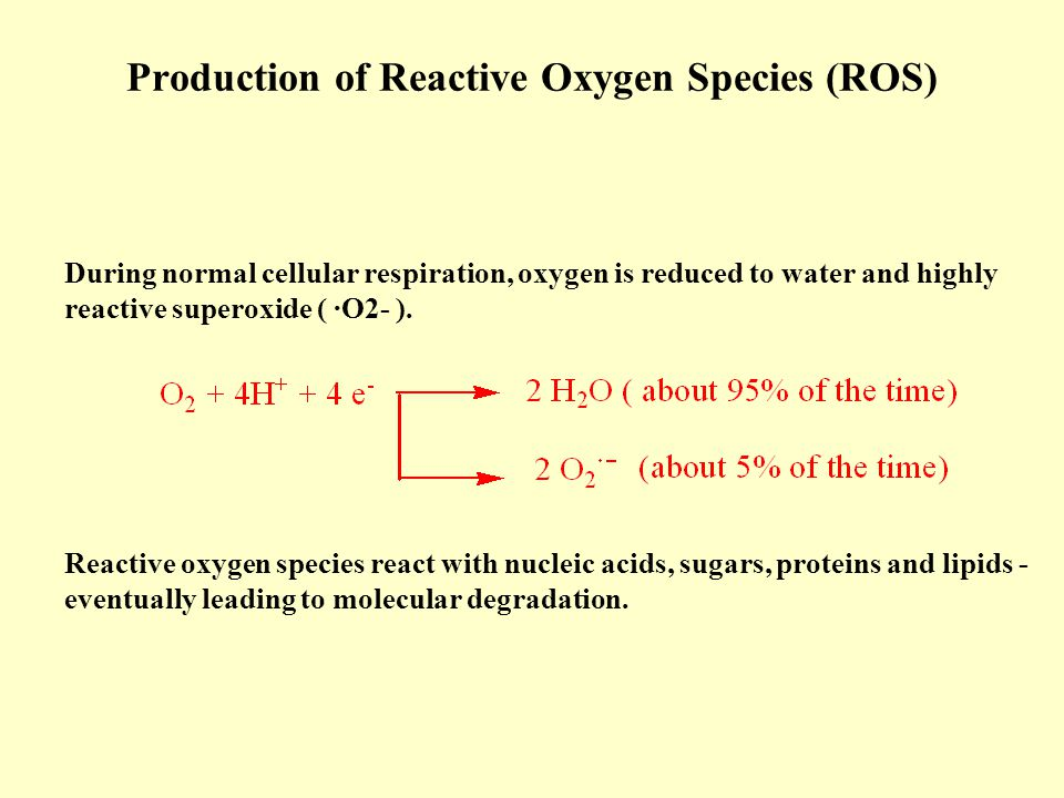 Production of Reactive Oxygen Species (ROS)