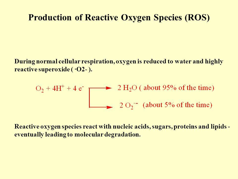 Production of Reactive Oxygen Species (ROS)