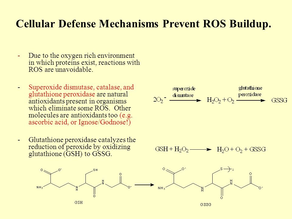 Cellular Defense Mechanisms Prevent ROS Buildup.