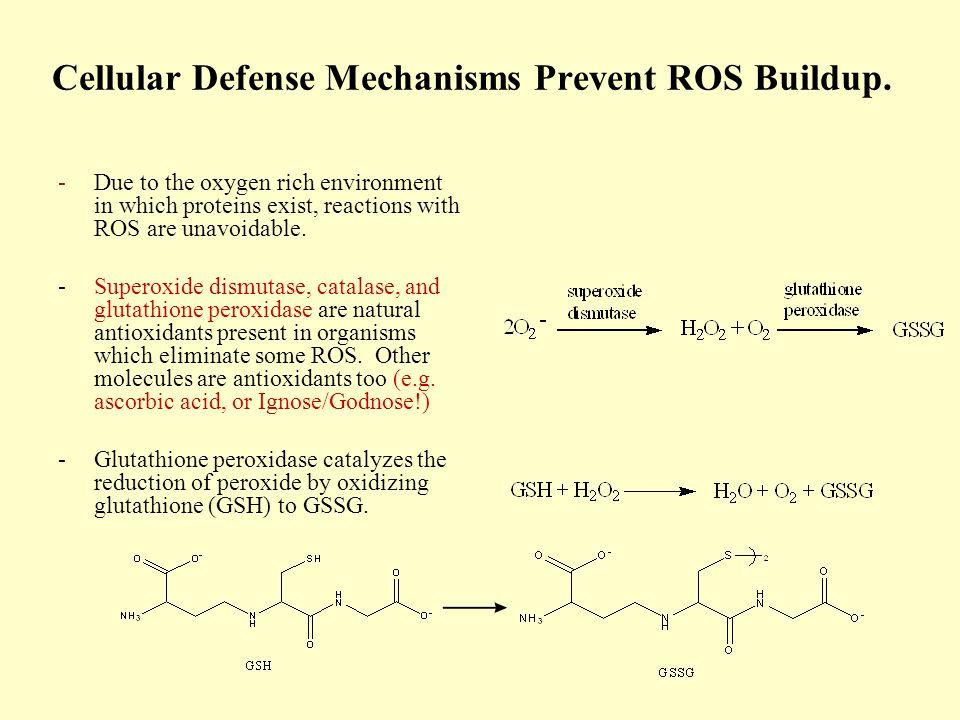 Cellular Defense Mechanisms Prevent ROS Buildup.