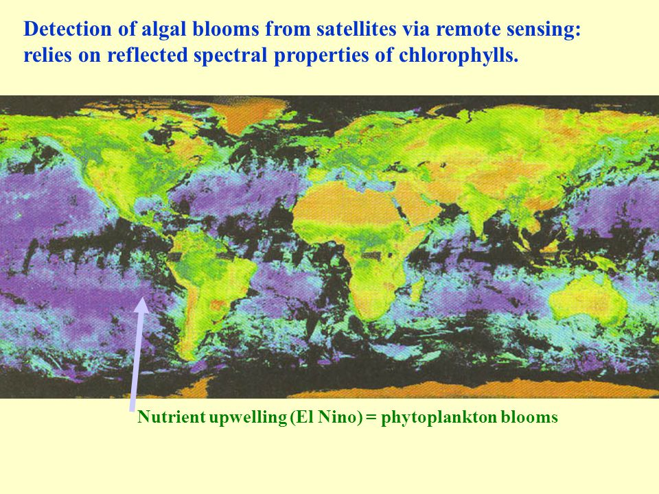 Detection of algal blooms from satellites via remote sensing: relies on reflected spectral properties of chlorophylls.