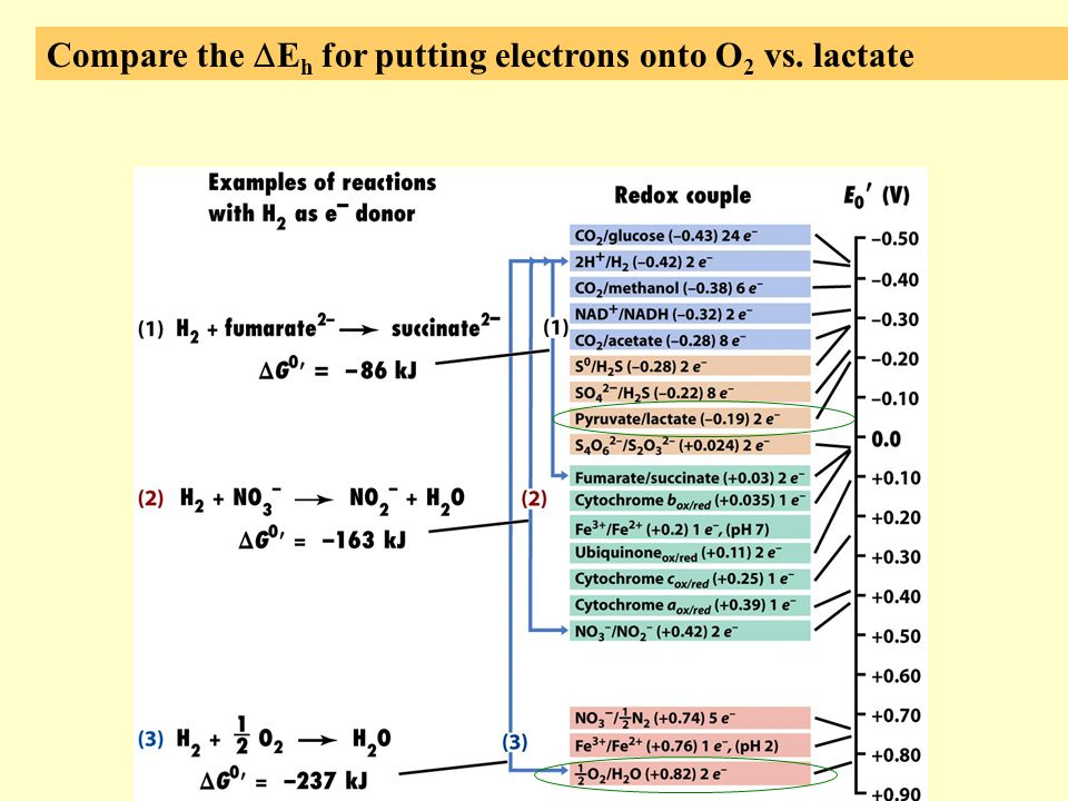 Compare the DEh for putting electrons onto O2 vs. lactate