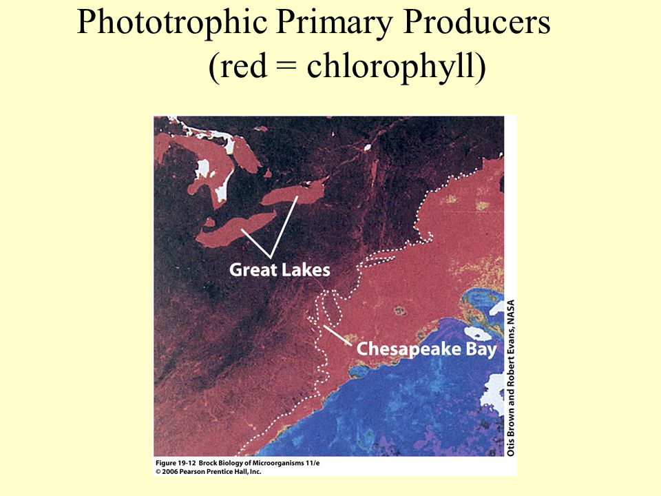 Phototrophic Primary Producers (red = chlorophyll)