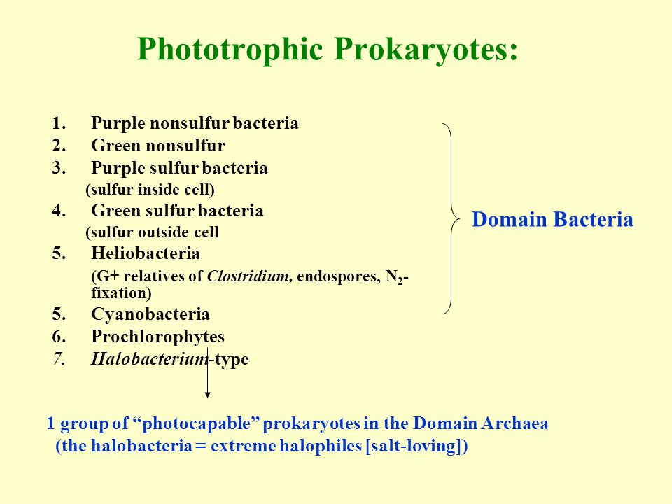Phototrophic Prokaryotes: