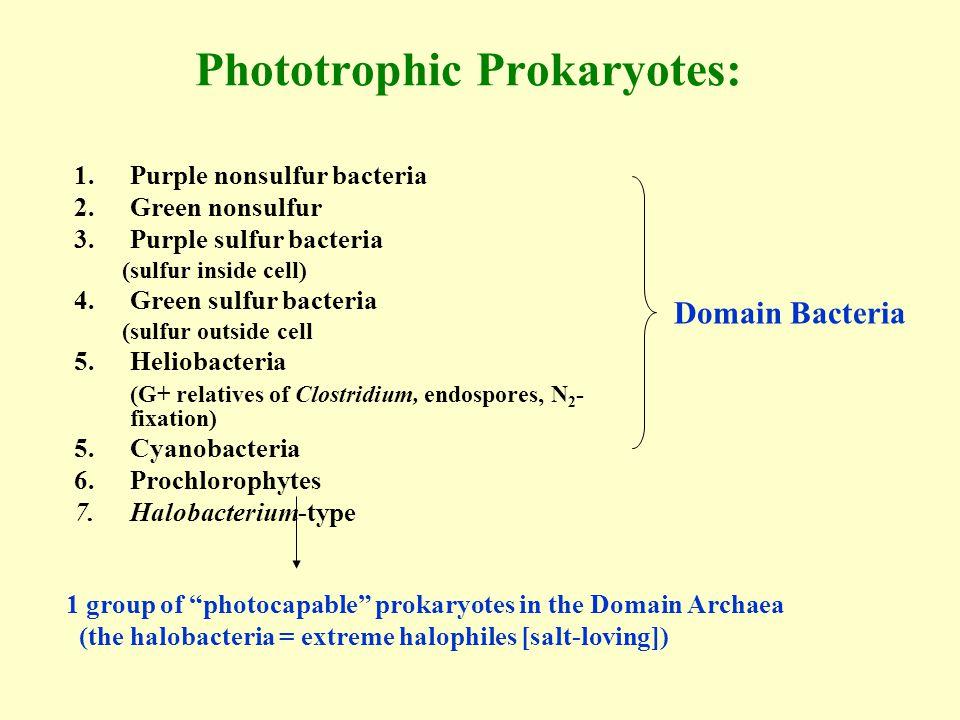 Phototrophic Prokaryotes: