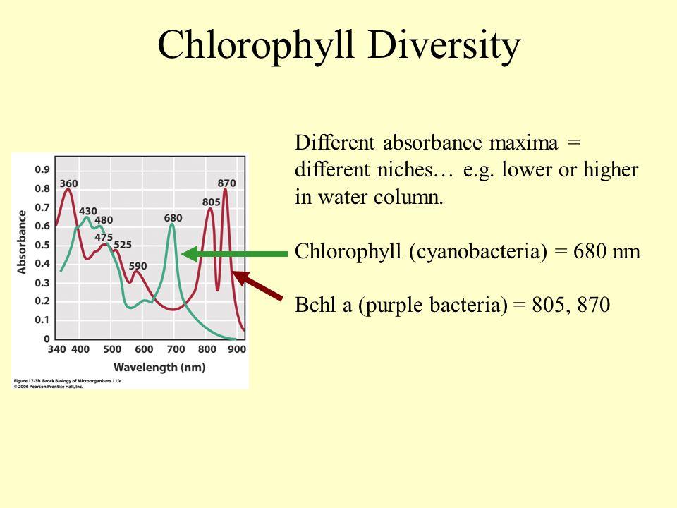Chlorophyll Diversity