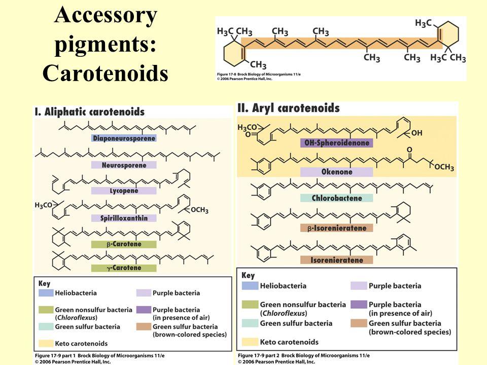 Accessory pigments: Carotenoids