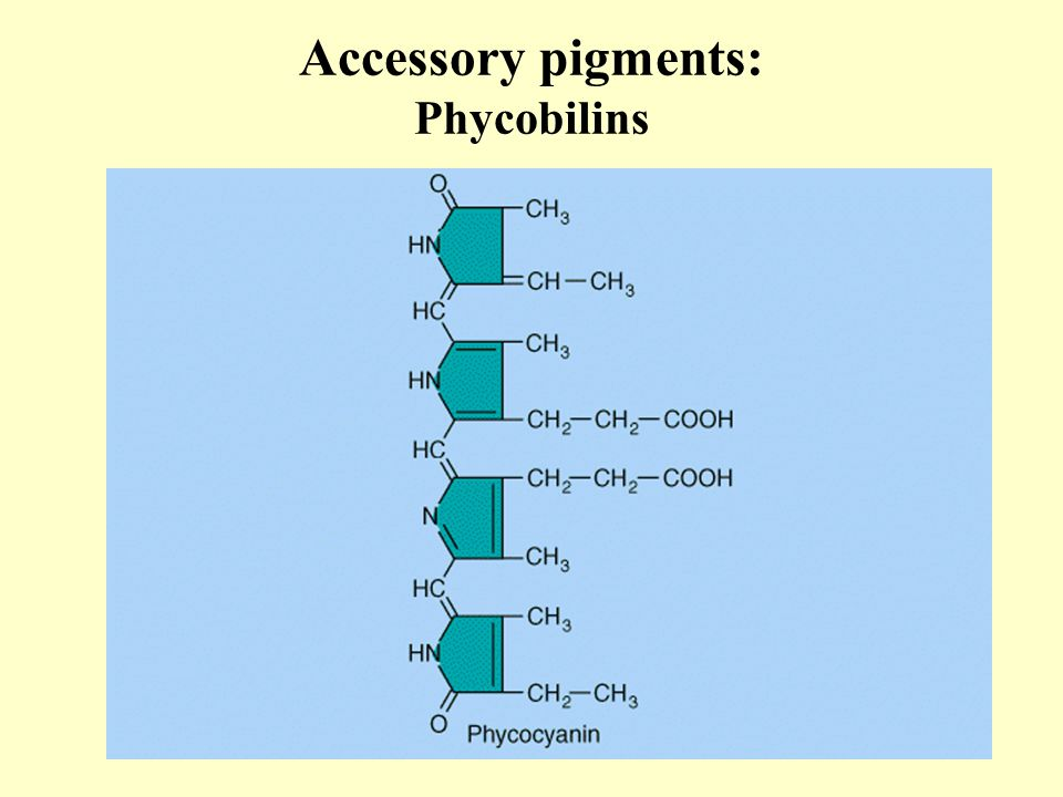 Accessory pigments: Phycobilins