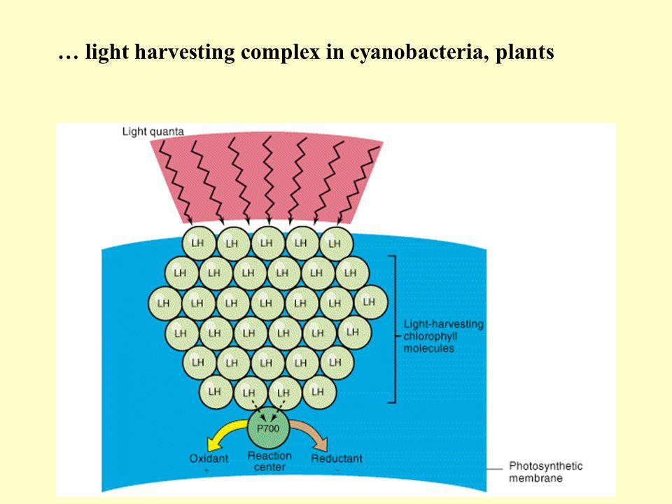 … light harvesting complex in cyanobacteria, plants