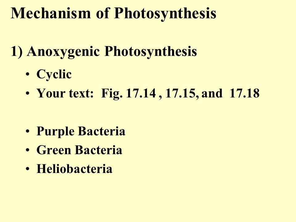 Mechanism of Photosynthesis 1) Anoxygenic Photosynthesis