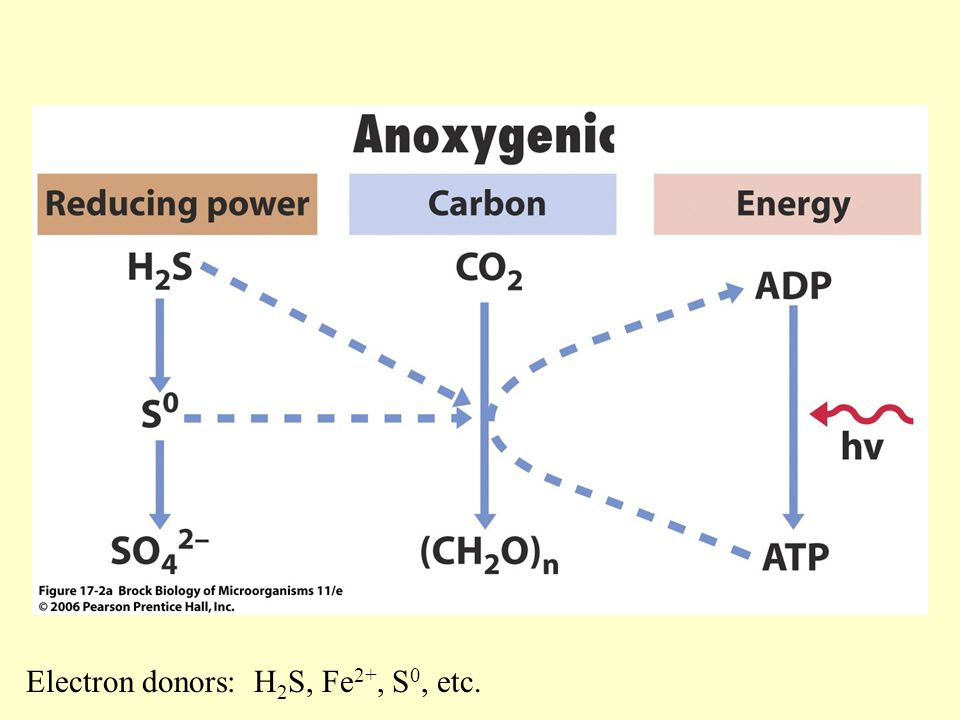 Electron donors: H2S, Fe2+, S0, etc.