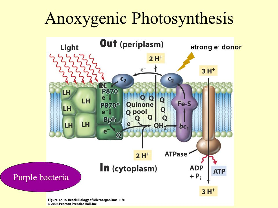 Anoxygenic Photosynthesis