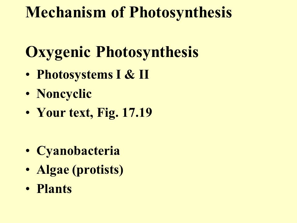 Mechanism of Photosynthesis Oxygenic Photosynthesis
