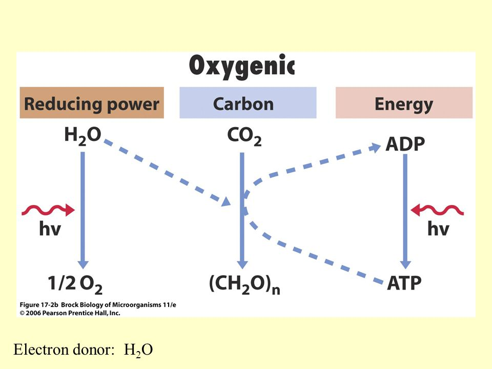 Electron donor: H2O