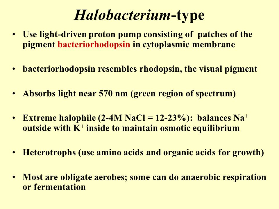 Halobacterium-type Use light-driven proton pump consisting of patches of the pigment bacteriorhodopsin in cytoplasmic membrane.