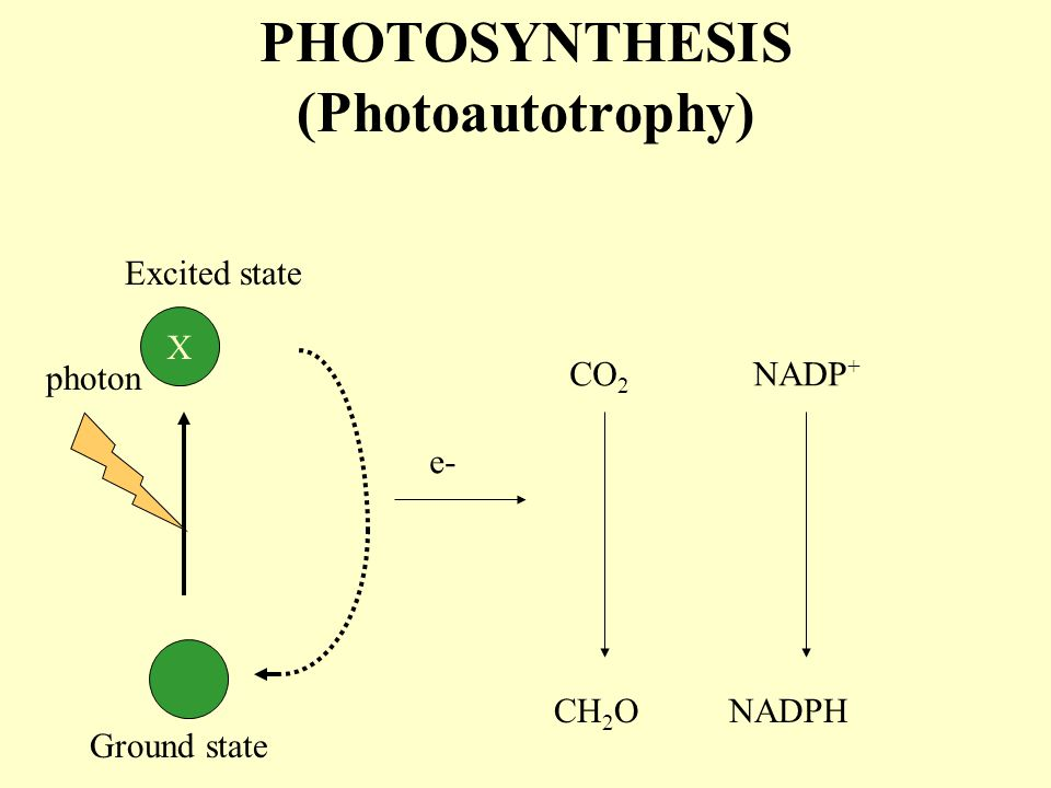 PHOTOSYNTHESIS (Photoautotrophy)