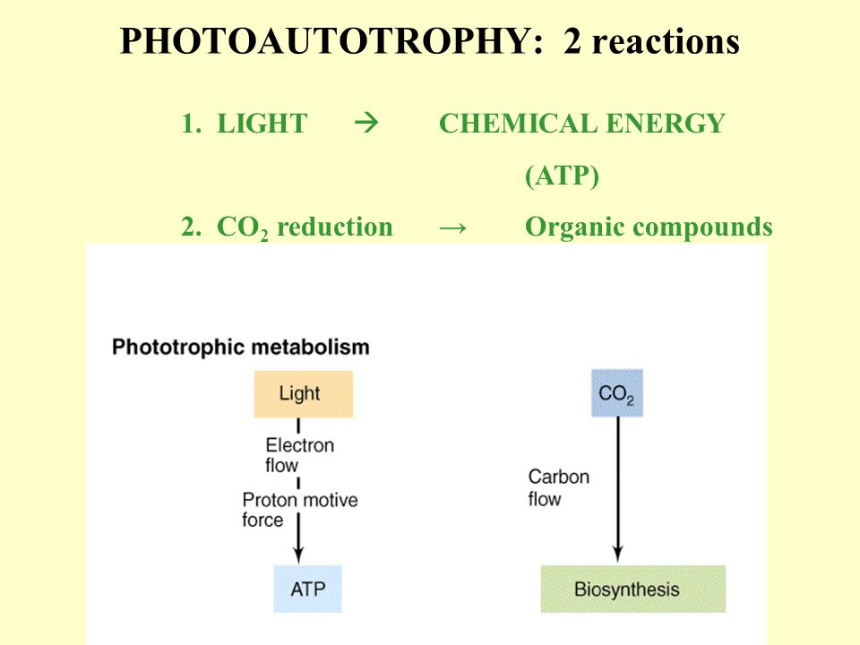 PHOTOAUTOTROPHY: 2 reactions
