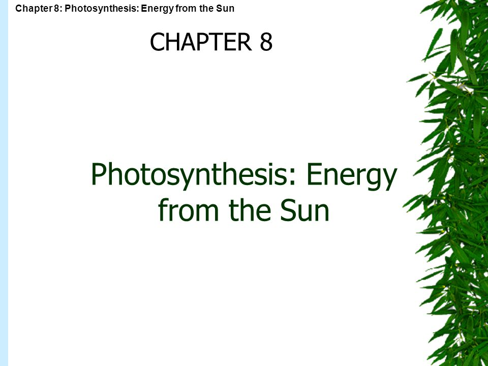 Photosynthesis: Energy