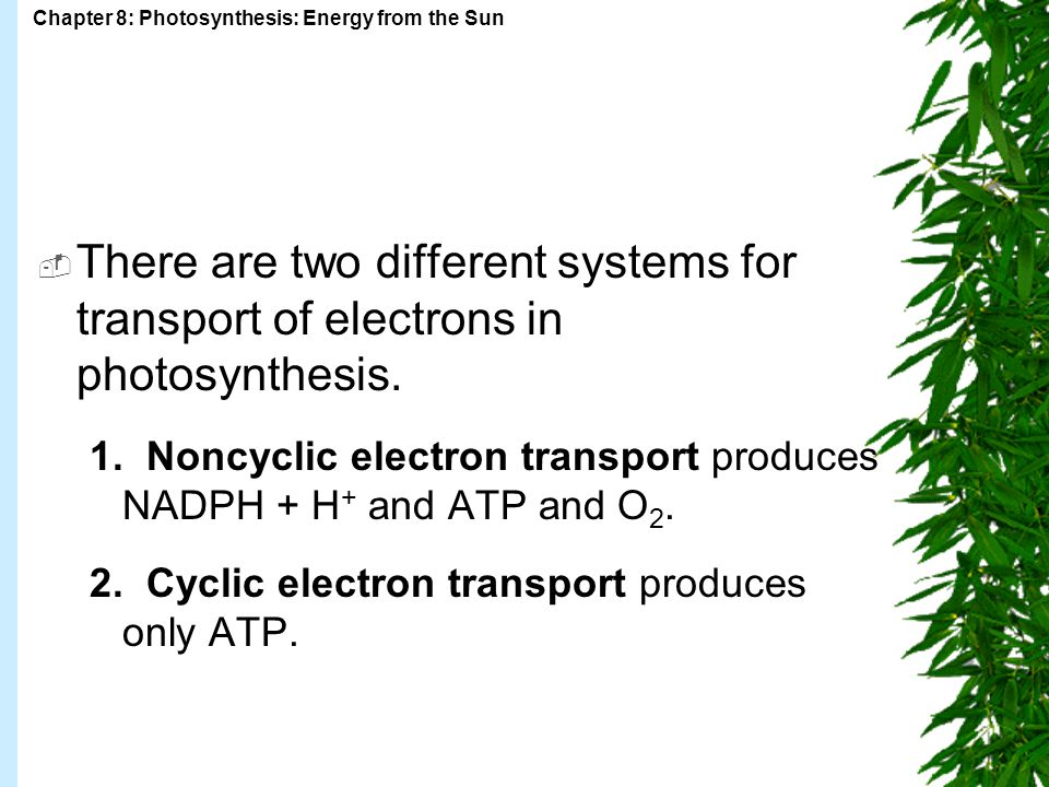There are two different systems for transport of electrons in photosynthesis.