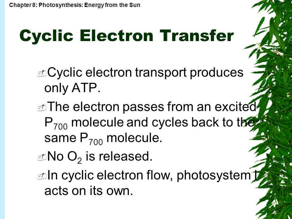 Cyclic Electron Transfer