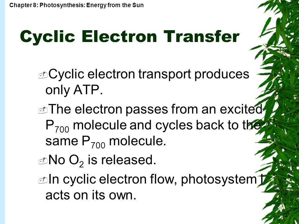 Cyclic Electron Transfer