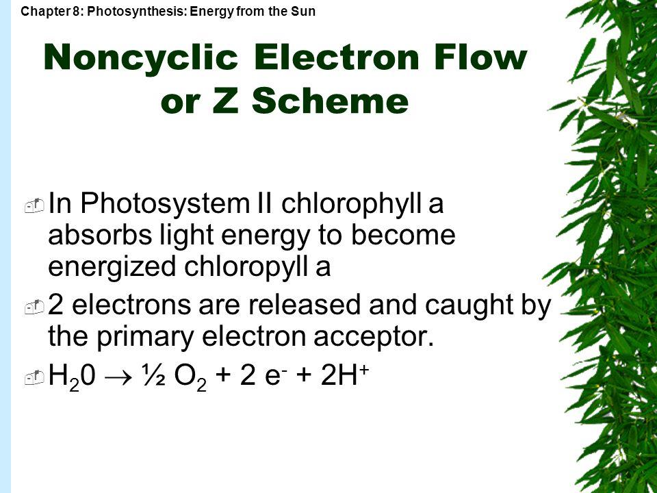 Noncyclic Electron Flow or Z Scheme