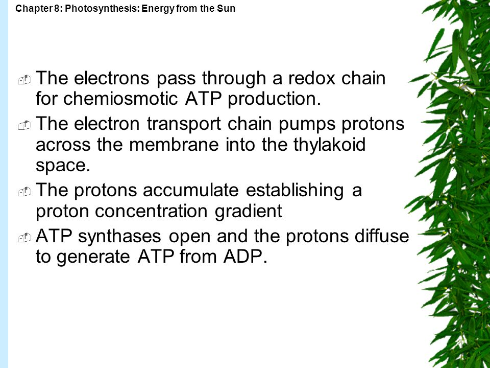 The electrons pass through a redox chain for chemiosmotic ATP production.