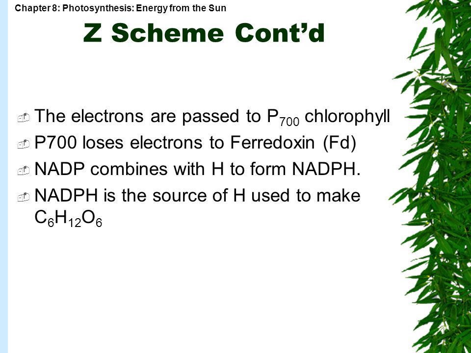 Z Scheme Cont'd The electrons are passed to P700 chlorophyll