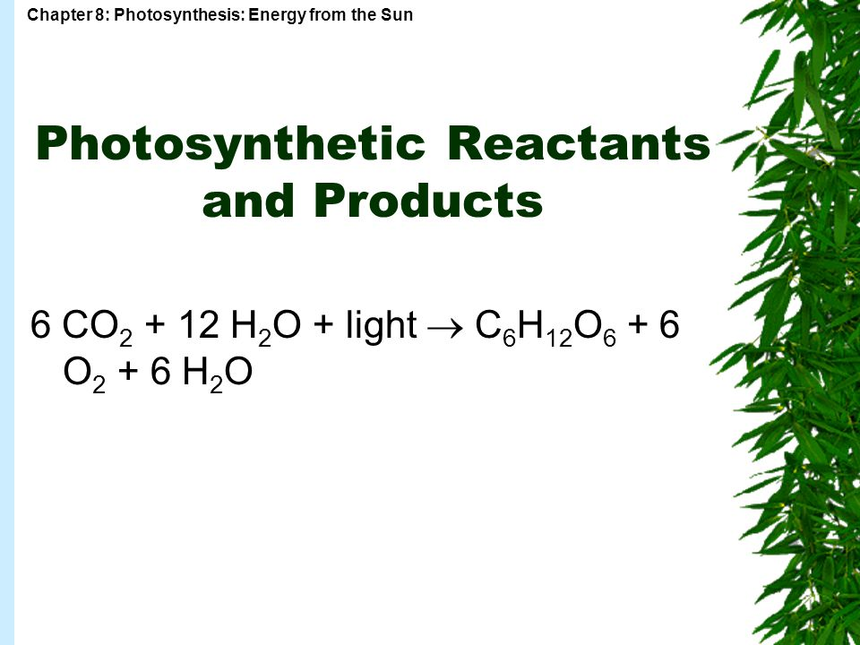 Photosynthetic Reactants and Products