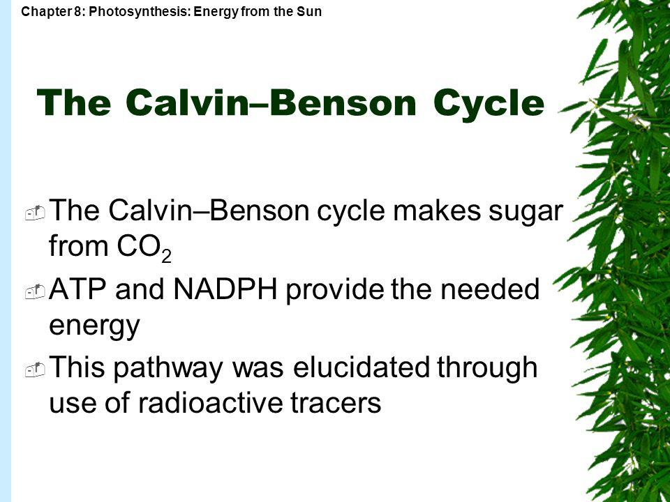 The Calvin–Benson Cycle