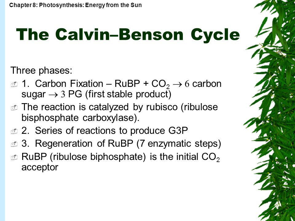 The Calvin–Benson Cycle