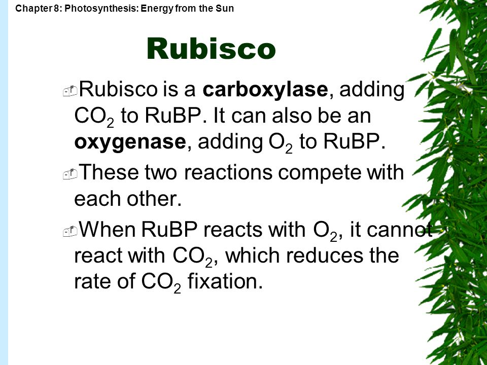 Rubisco Rubisco is a carboxylase, adding CO2 to RuBP. It can also be an oxygenase, adding O2 to RuBP.