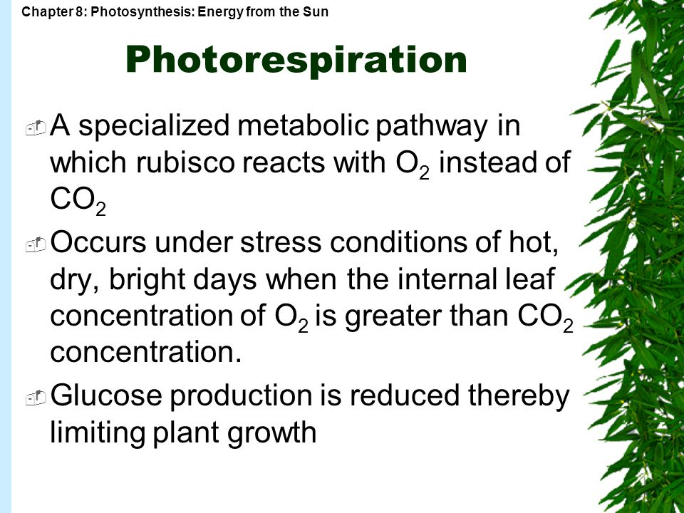 Photorespiration A specialized metabolic pathway in which rubisco reacts with O2 instead of CO2.