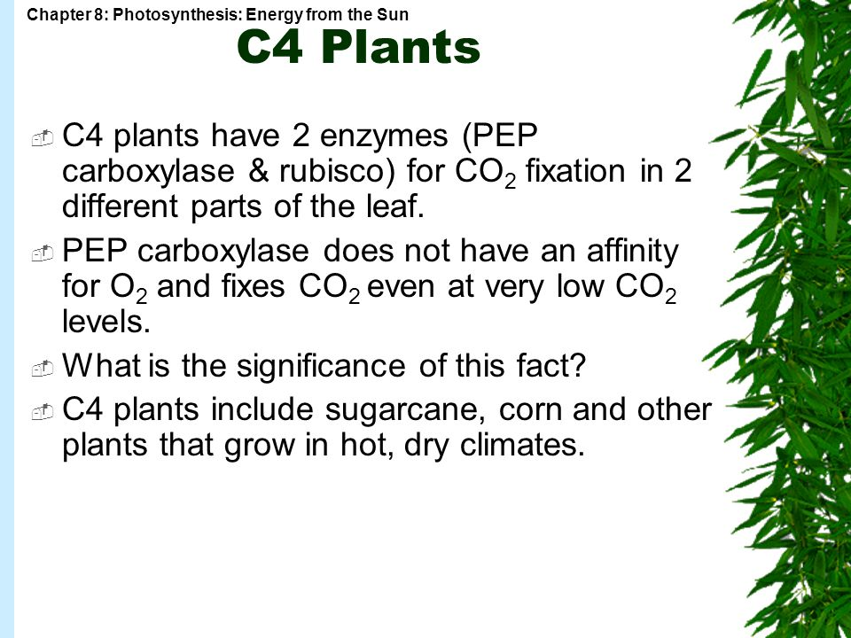 C4 Plants C4 plants have 2 enzymes (PEP carboxylase & rubisco) for CO2 fixation in 2 different parts of the leaf.