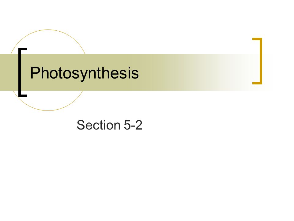 Photosynthesis Section 5-2